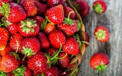 Erdbeeren sind begehrte Vitamin C-Wunder