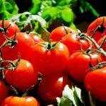 Tomaten: Allzweckwaffe in Gemüseform