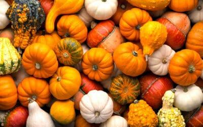 Kürbis ist das Herbstgemüse der Superlative